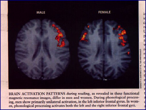 gender gaps on the brain By fifth grade, the brain is slowing its previously furious development of new axons and dendrites — thus reducing its openness to new connections however, the brain is also accelerating the myelination process that builds sheaths around axons, speeding up the neural pathways that are.